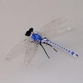 Libelle stehend, Fadenglas, kristall-blau