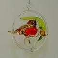Vogelfamilie Rotkehlchen mit Jungvogel im Ring, -Neu-