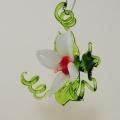 Blüte stellend und hängend, klein, weiß, rot, altrosa