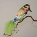 Kookaburra, FS oliv weiß matt, türkis/orange/braun  -NEU-