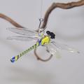 Libelle hängend, Klarglas, Fadenglas, gelb-blau
