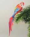 Papagei, roter Ara, Naturfeder