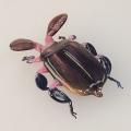 Fühlerkäfer